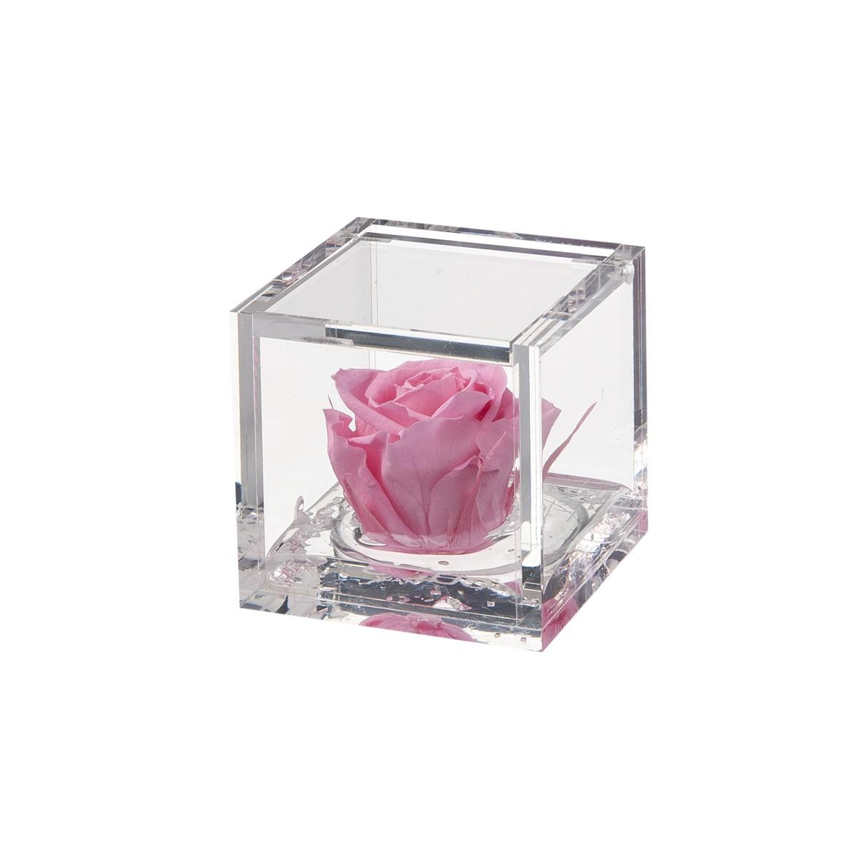 Flowercube Rosa Rosa 6x6