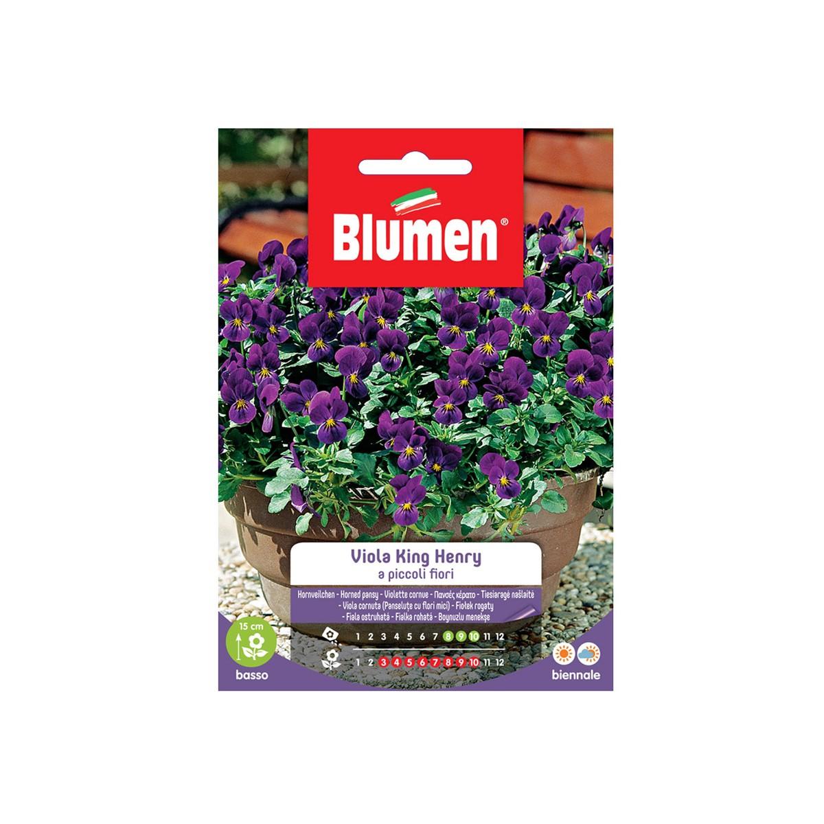 Piante Basse Da Aiuola semi viola king henry a piccoli fiori
