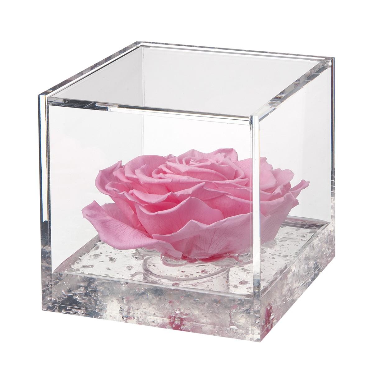 Flowercube Rosa Rosa 12x12