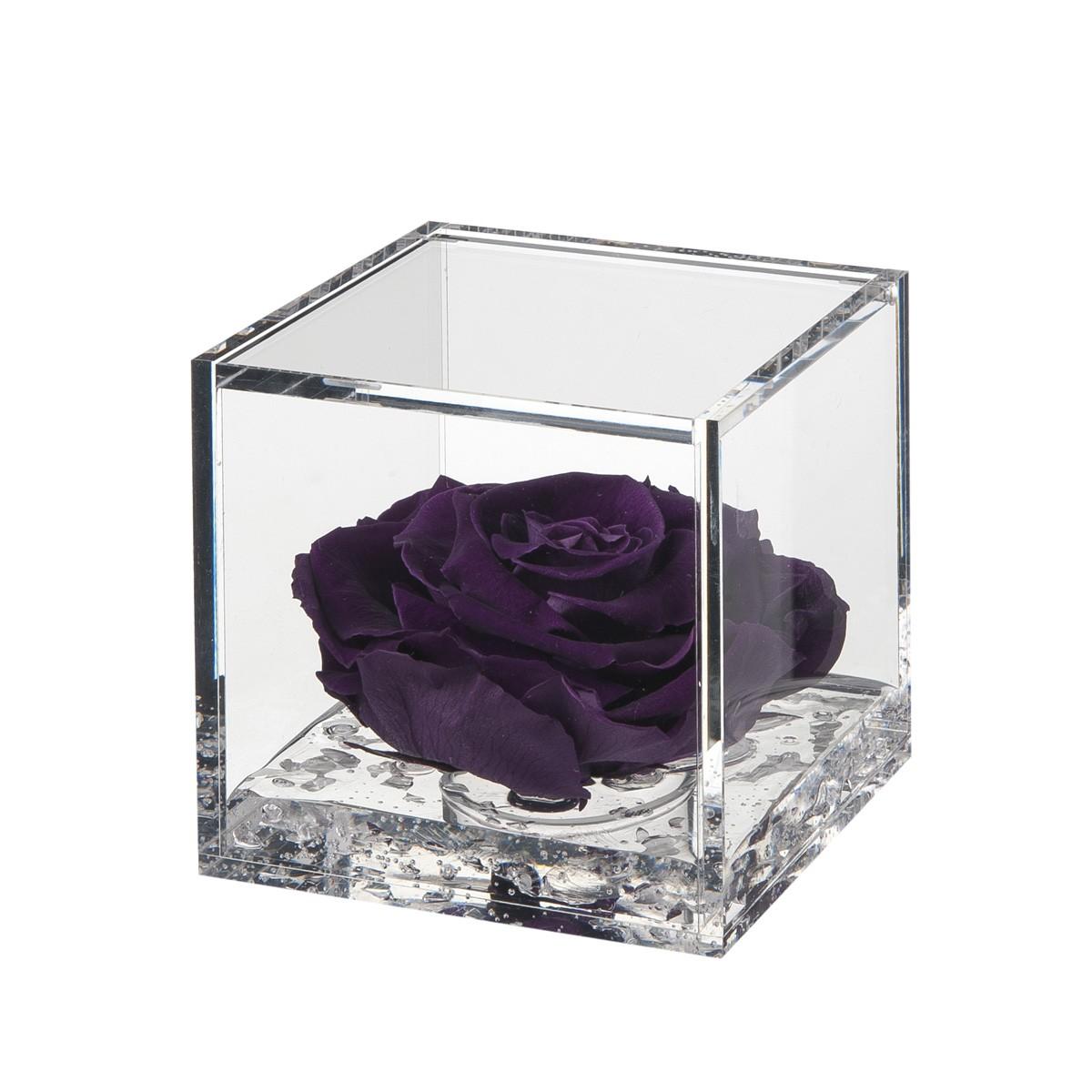Flowercube Rosa Viola 10x10