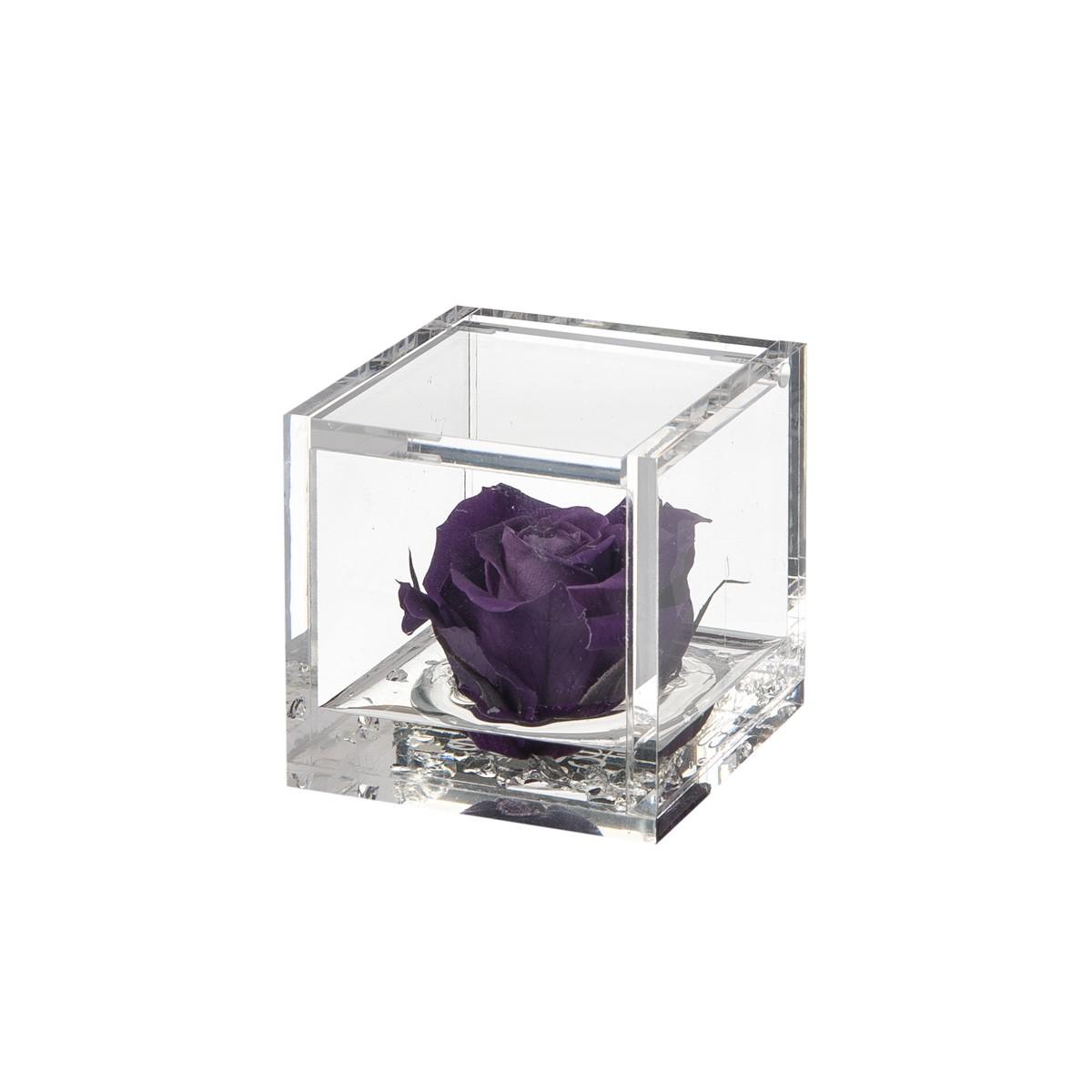 Flowercube Rosa Viola 6x6