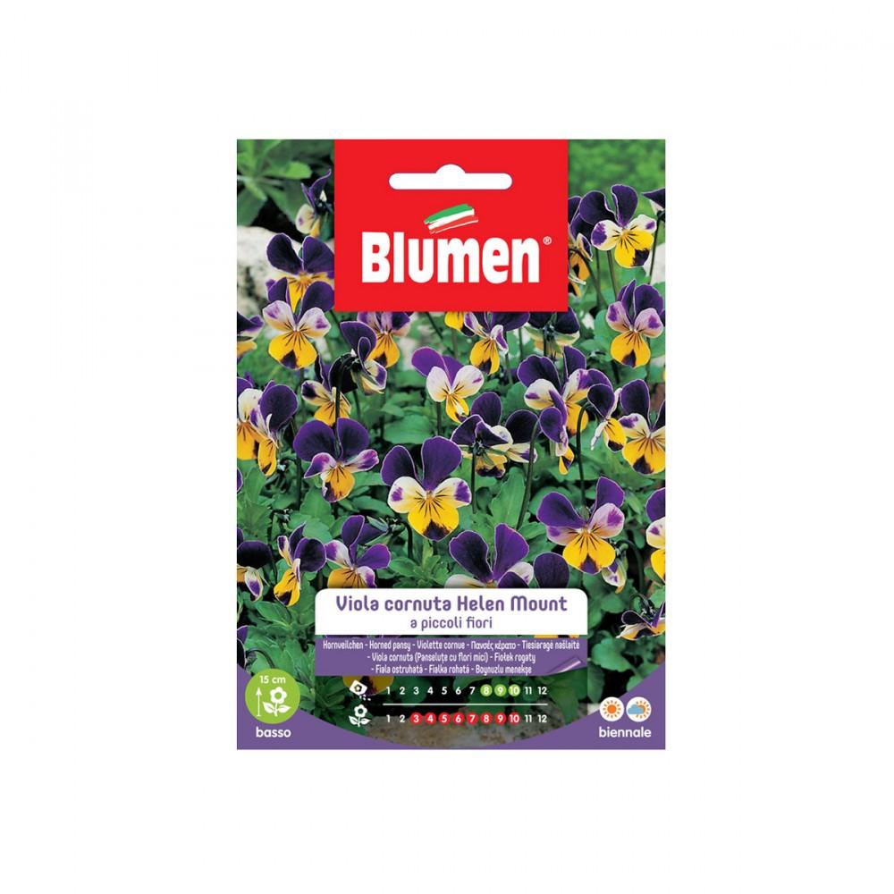 La Viola Cornuta Helen Mount è Una Pianta Biennale Dai Fiori Vivaci Multicolore Viola-bianchi-gialli. E' Molto Indicata Come Pianta Da Vaso, Ma Anche Per Aiuole, Vialetti E Bordure Basse.