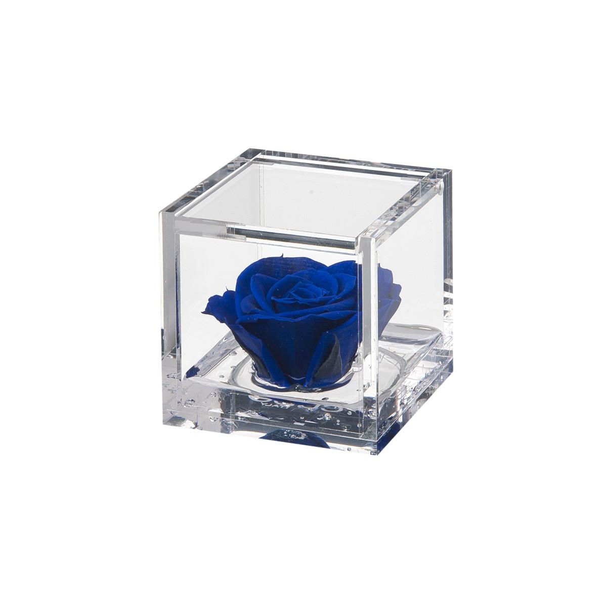 Flowercube Rosa Blu 6x6