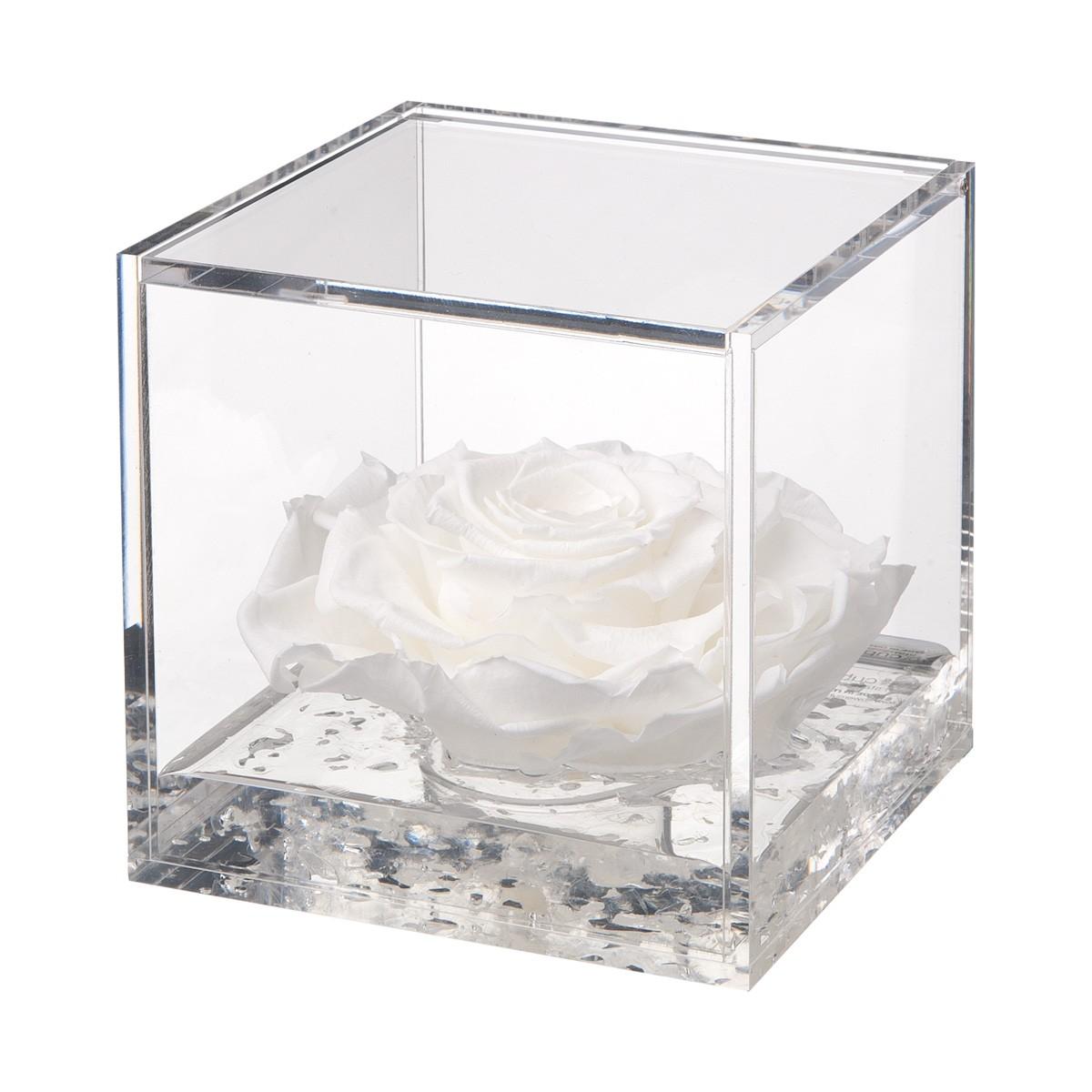 Flowercube Rosa Bianca 12x12