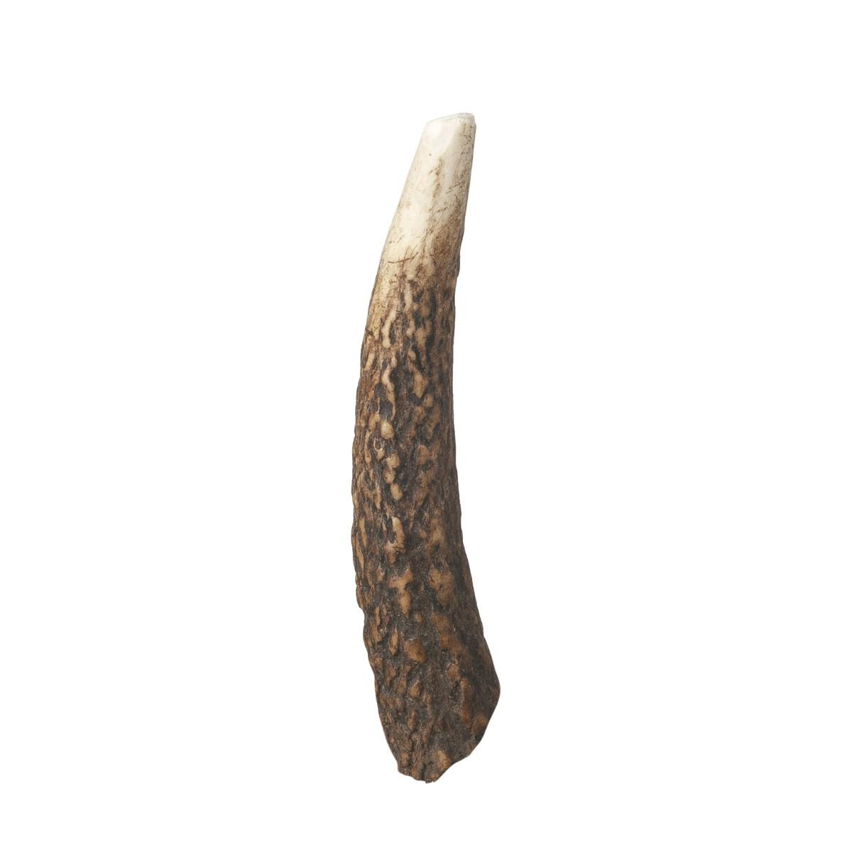 Corno Di Cervo Large