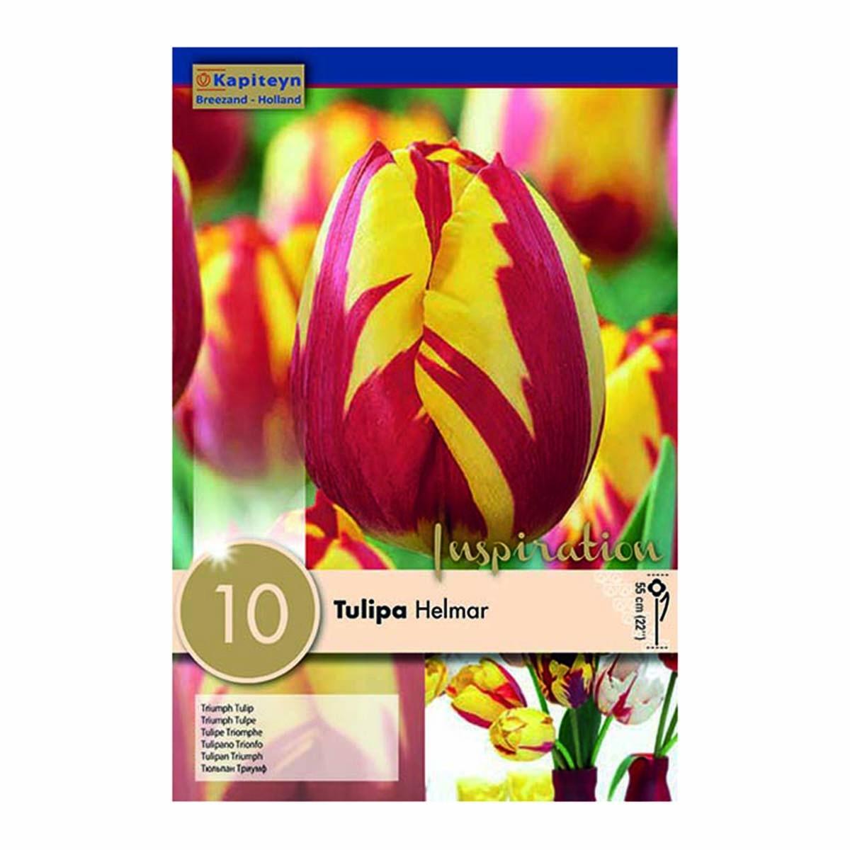 Bulbi Di Tulipani Helmar