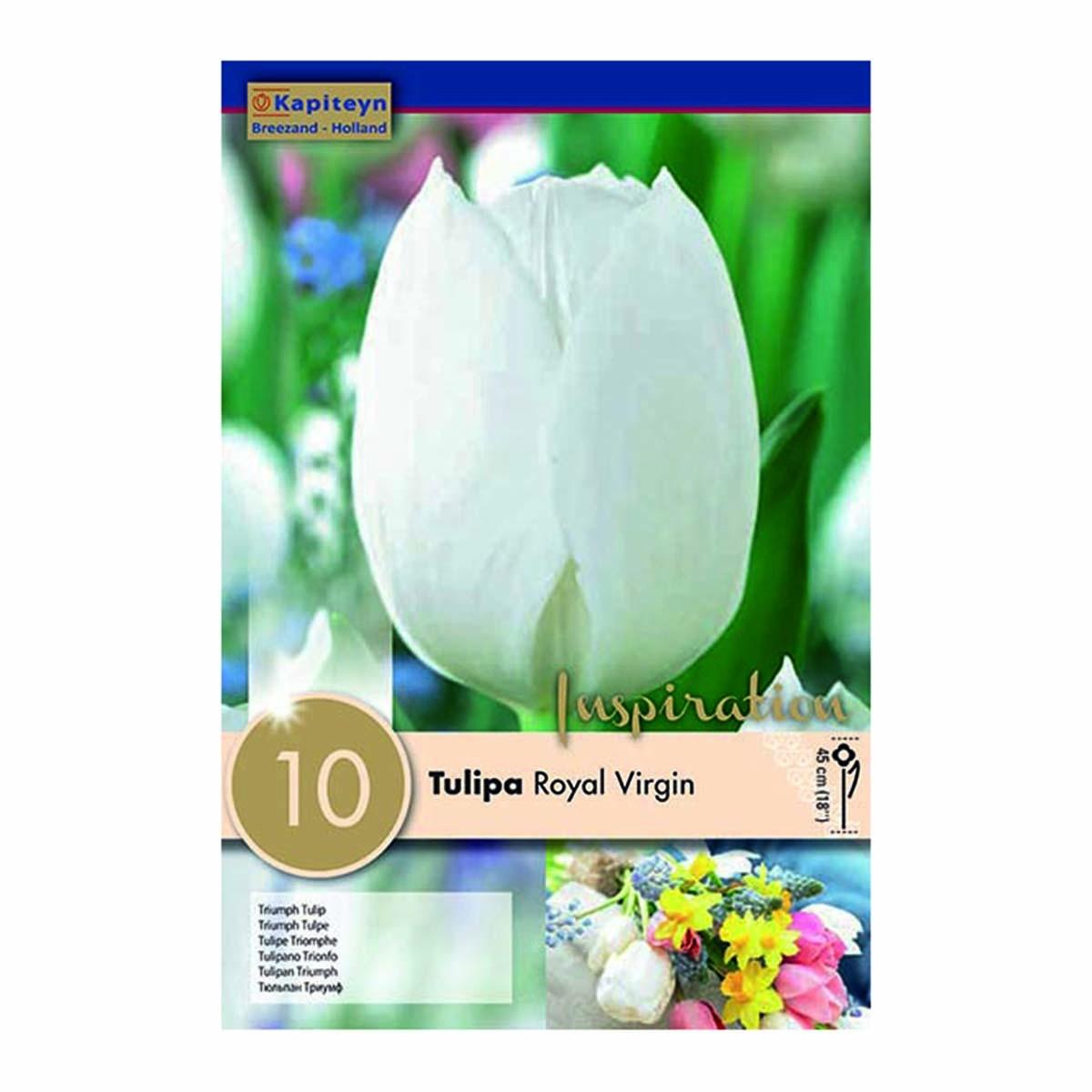 Bulbi Di Tulipani Royal Virgin