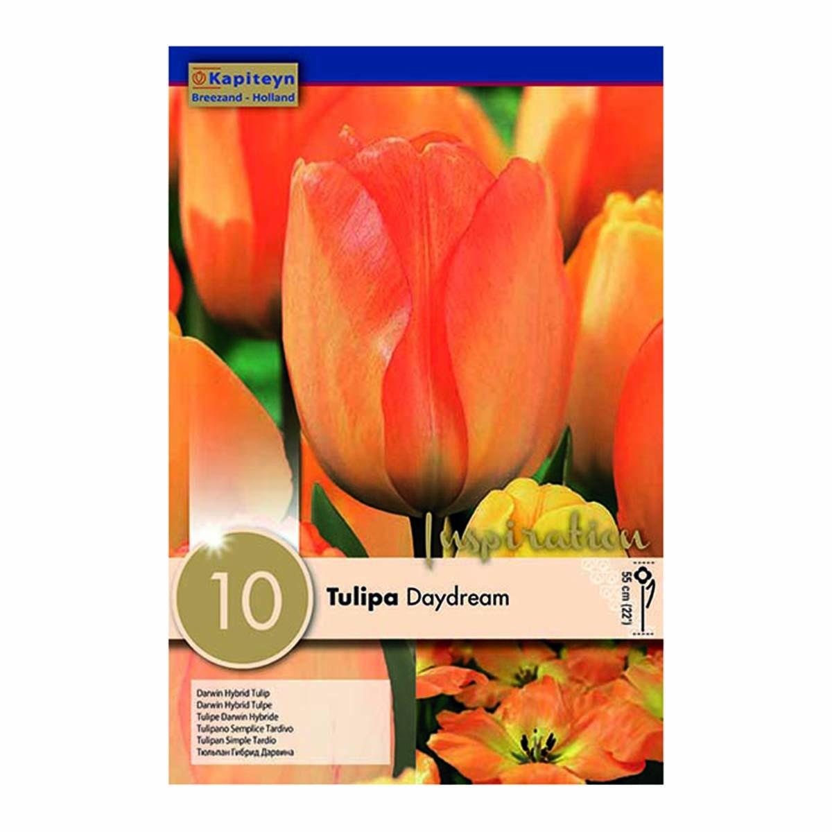 Bulbi Di Tulipani Darwin Hybrid Daydream