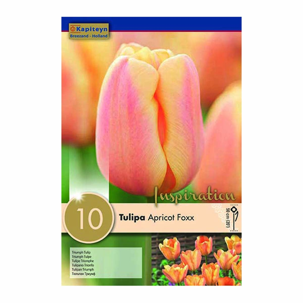 Bulbi Di Tulipani Triumph Apricot Foxx