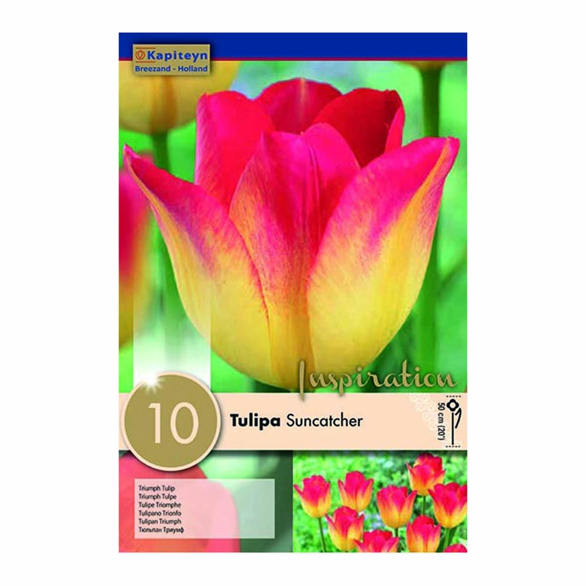 Bulbi Di Tulipani Suncatcher