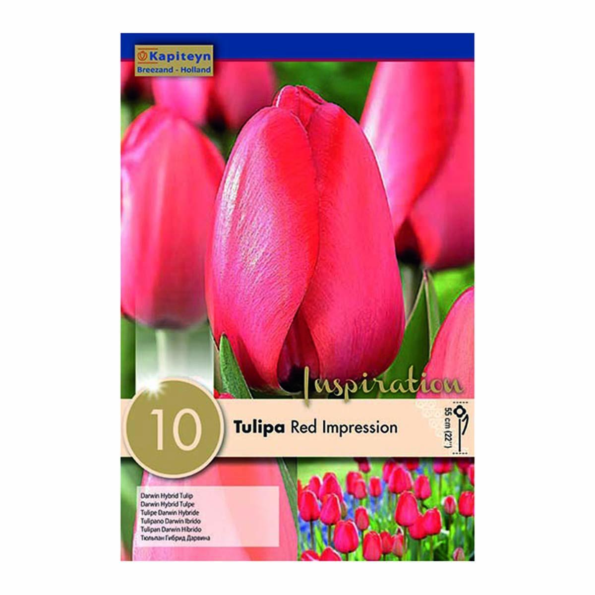 Bulbi Di Tulipani Darwin Hybrid Rosso Imperiale