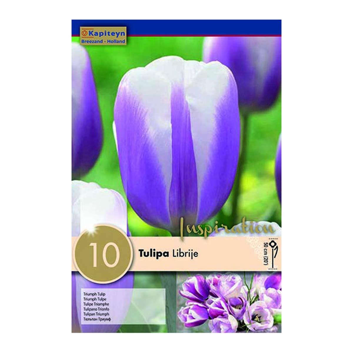 Bulbi Di Tulipani Librije