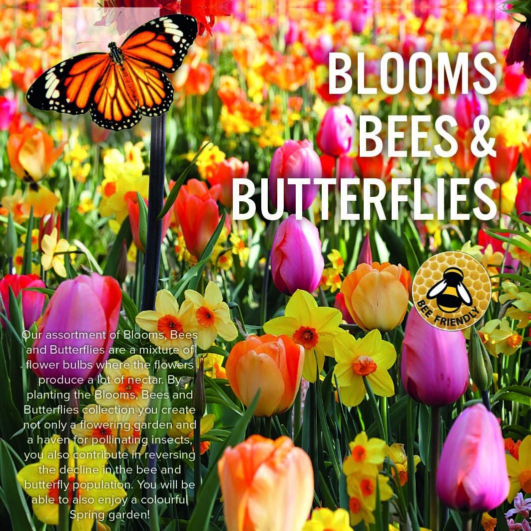 Bulbi Da Fiore Per Api E Farfalle Palette Pastello