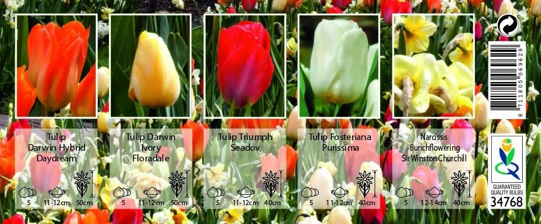Bulbi Da Fiore Per Api E Farfalle Palette Sunshine