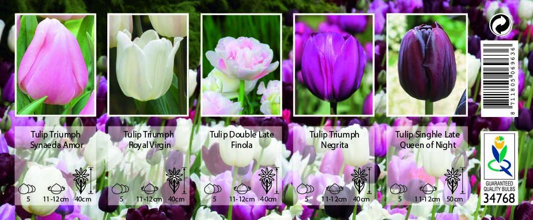 Bulbi Da Fiore Per Api E Farfalle Palette Rosa