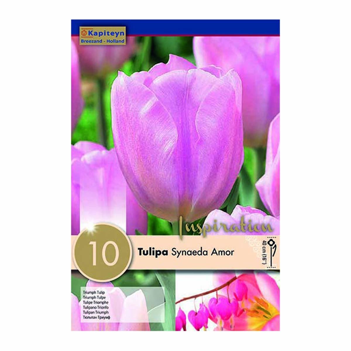 Bulbi Di Tulipani Synaeda Amor