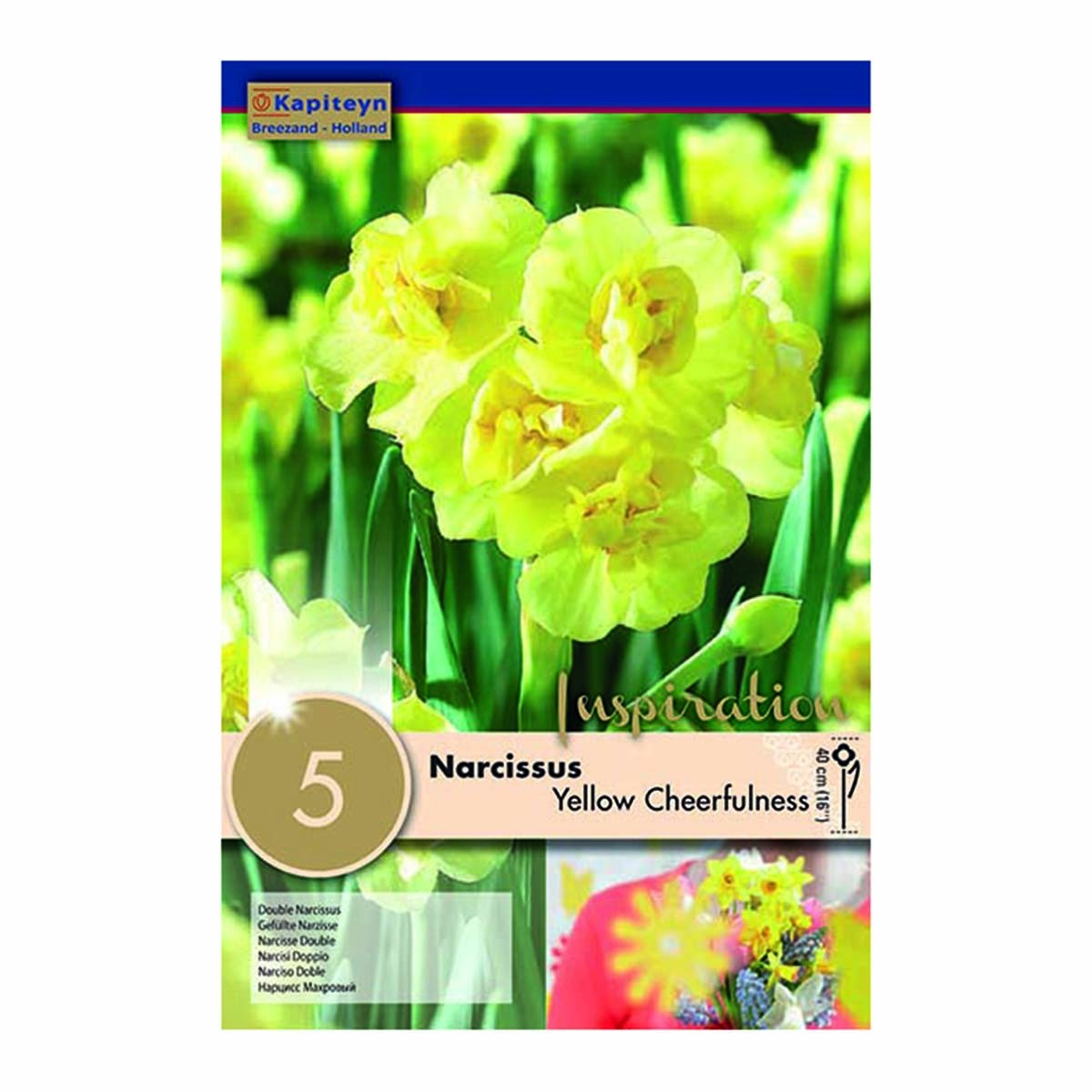 Bulbi Di Narcisi Yellow Cheerfulness