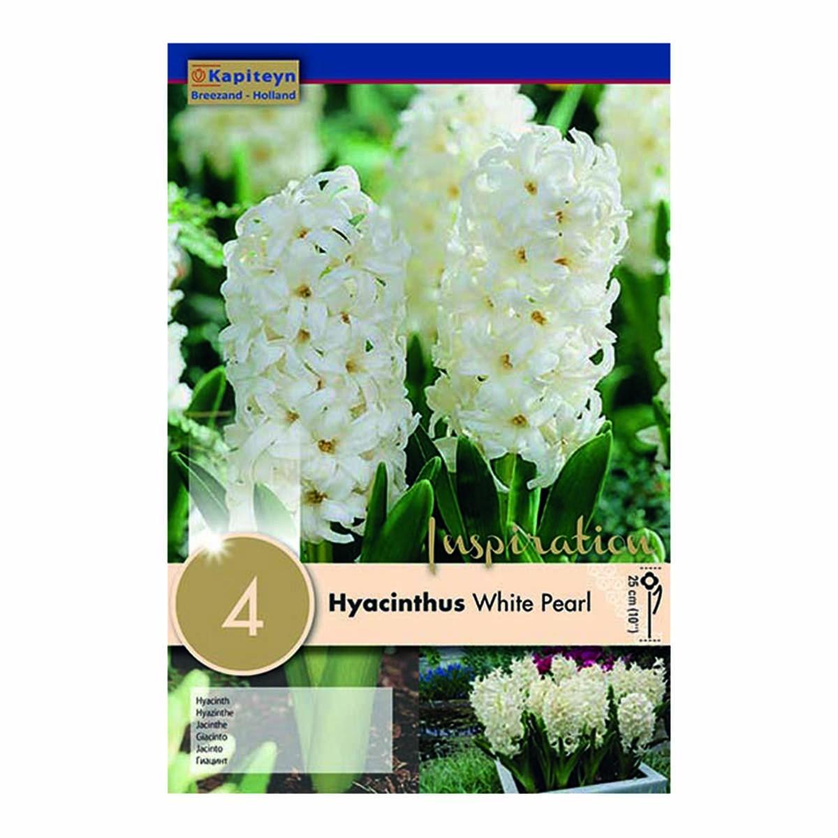 Bulbi Di Hyacinthus Carnegie White Pearl X 4