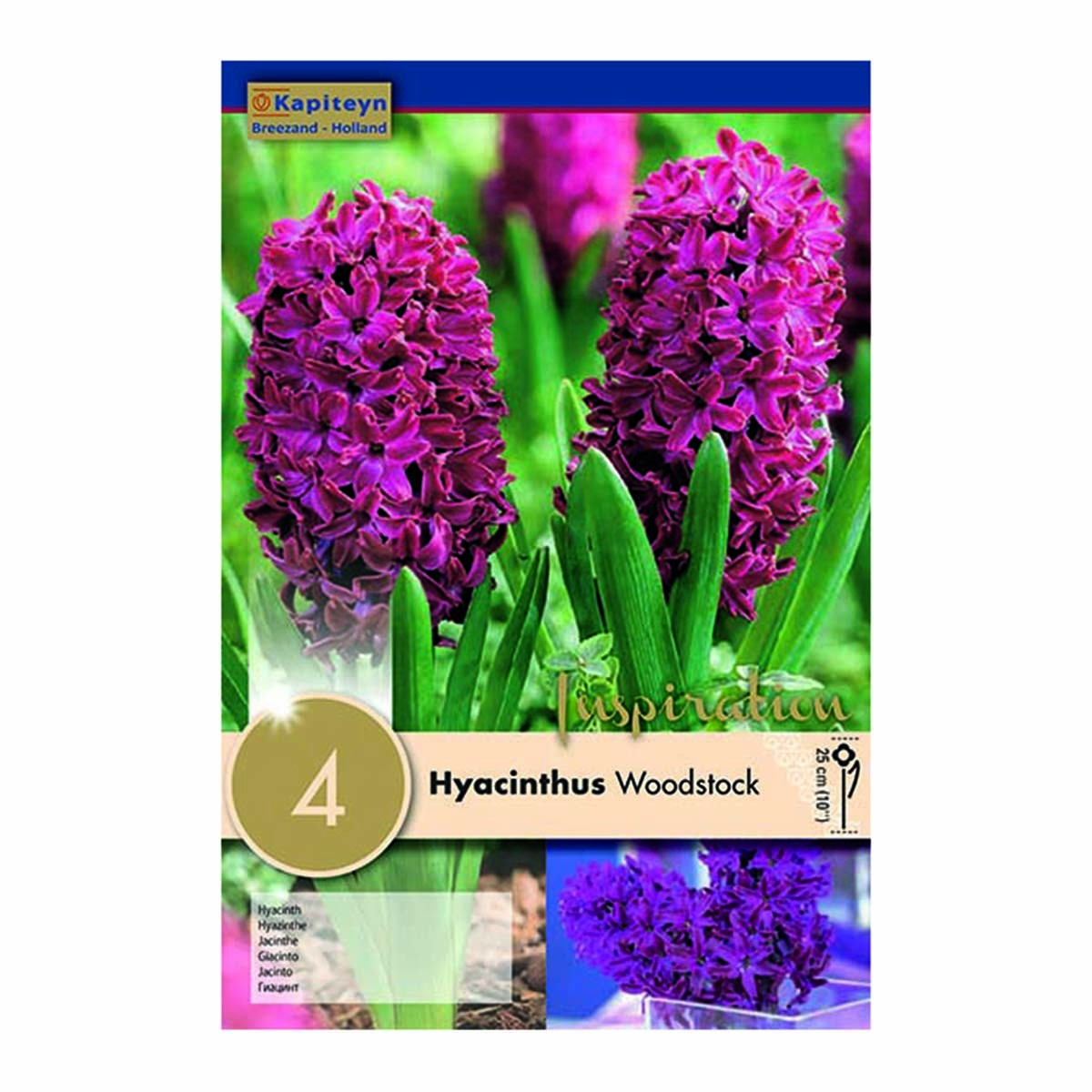 Bulbi Di Hyacinthus Woodstock