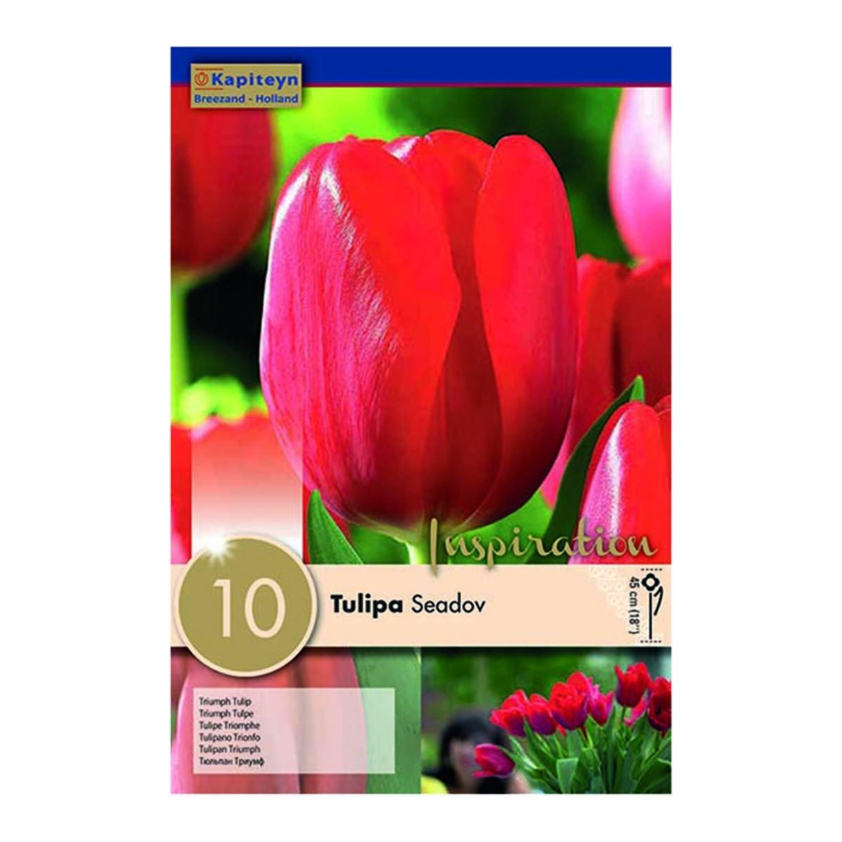 Bulbi Di Tulipani Seadov