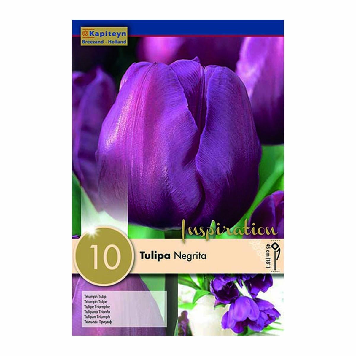 Bulbi Di Tulipani Negrita