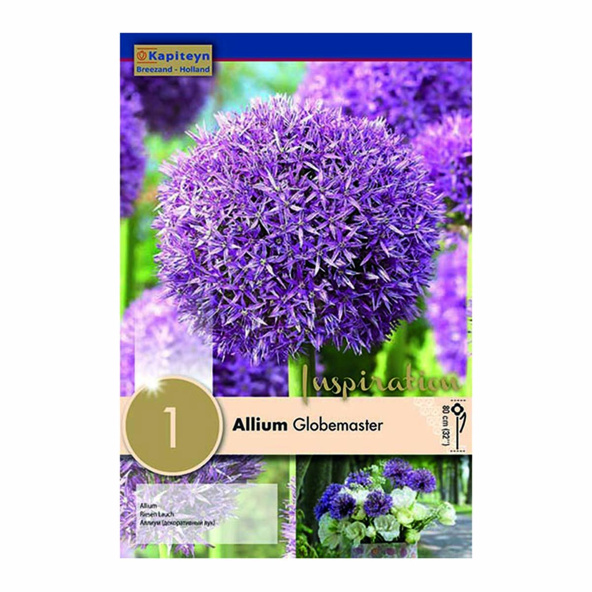 Bulbi Di Allium Globemaster