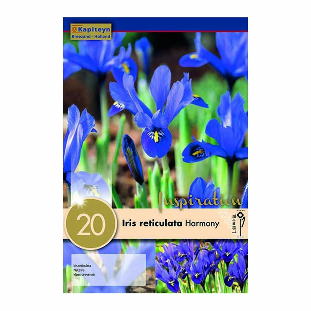 Bulbi Di Iris Reticulata Harmony