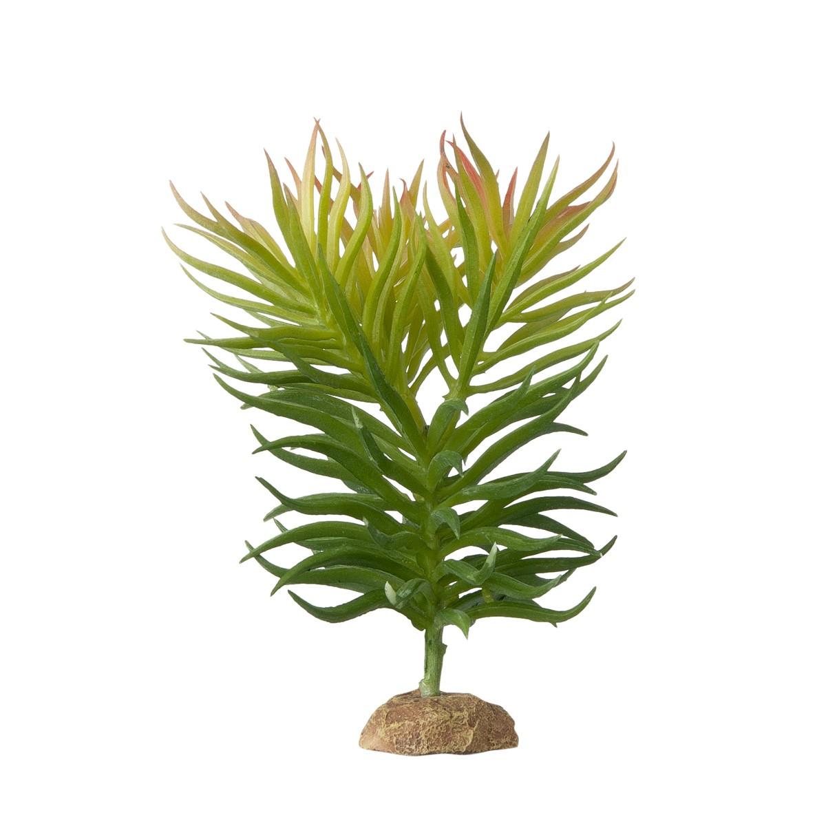 Decorazione Per Acquari Pianta Succulenta